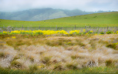 Coastal Landscape (-Dagmar-) Tags: piedrasblancas california northcoast sanluisobispocounty fence