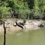 Crocodile Safari (8 June)
