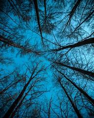 2018-06-15_01-13-01 (xskyven) Tags: praha les prochazka zima trees sky wide blue