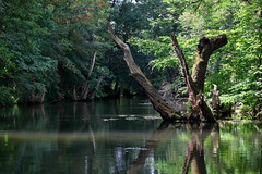 natural abstracts (bkellerstrass) Tags: river water reflection reflections abstract nature natural green trees forest wood spring