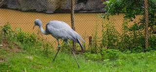 Bird - 5339