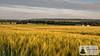 SunriseRun in den Weinbergen über Selzen (Frank Hamm) Tags: deutschland rheinlandpfalz rheinhessen selztal selzen sunriserun laufen joggen weinberge