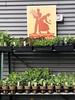 Gardening (Melinda Stuart) Tags: garden plants gardening spring vegetables basil store poster food growyourown display