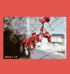 Redd (sangyeholden) Tags: minimalistic art photography japan tokyo artistic instagram leaf red glitch font