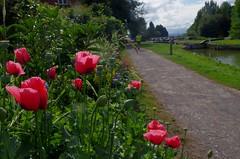 1479-12L (Lozarithm) Tags: caenhill devizes wilts canals kennetavon k50 pentax zoom 1855 smcpda1855mmf3556alwr