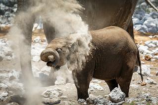 Dust bathing