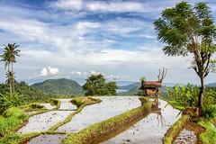 _MG_3158_5 (keulefm3) Tags: 2006 bali urlaub flickrtravelaward se–indonesia beautifulbali