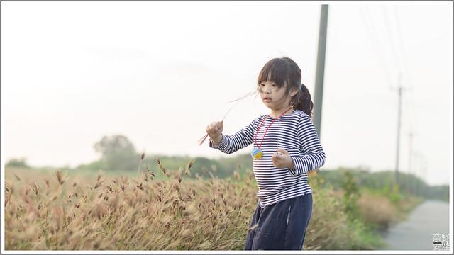 3月台南 親子寫真可以這樣拍 木棉花 蜀葵 小麥 一次讓你拍個夠 (71)