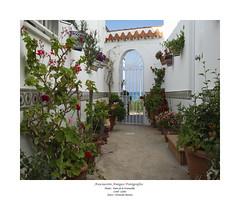 23 Fernando Moreno Vadillo - Patio de La Fontanilla - Conil (Cádiz)