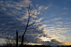 Easter Morning (Bo Dudas) Tags: easter jesus christ clouds sunrise sun tree trees natural nature blue sky horizon silhouette outside outdoors religious branch sunset resurrection