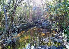 Gills Gully (Tony Markham) Tags: gillsgully creek stream water reflection garrawarrastateconservationarea