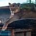 Columbus Zoo-17