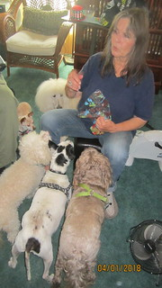 Candy and the 5 Easter dogs...