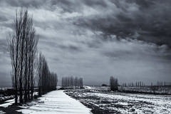 One of those days (citrusjig) Tags: fujifilm xe1 sigmasuperwideii24mmf28 vertical trees snow clouds dailyinapril svf blackandwhite toned