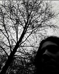 Micropoema: Ramas en la espalda (Josu Sein) Tags: literature literatura writing escritura reading lectura poetry poesía micropoem micropoema roots raíces wings alas branches ramas crushed aplastado surrealism surrealismo expressionism expresionismo selfportrait selfie autorretrato josusein