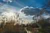 How great thou art.  💚🌍  #persephone #cloudporn #lake #art #sunset #nakedplanet #water #earthofficial #Flickrdaily #wildlifeplanet #light #london #reeds #wildlife #reflection #Flickr_nature #prettycitylondon #naturelover #Flickr # (jophipps1) Tags: london beauty flickrdaily prettycitylondon reeds cloudporn persephone wildlife art reflection nature landscapelovers wildlifeplanet tree water flickr flickrnature naturelover light sunset nakedplanet silhouette earthofficial theprettycities lake landscape