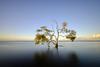 Nudgee Mangrove (Rodney Topor) Tags: nudgee queensland seascape shoreline mangrove nudgeebeach tree lonetree longexposure xt2 xf1024mm