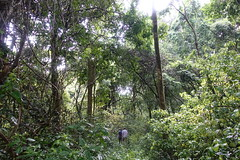 Adjumani - Zoka Central Forest Reserve (FAO Forestry) Tags: fao un uganda refugees unhcr world bank environment energy south sudan woodfuel forestry