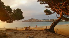 20180512_065630 (2) (hans 1960) Tags: landschaft landscape trees bäume pinie meer wasser mittelmeer sand strand beach himmel sky felsen rock zaun fence ferien urlaub holyday spanien espania cala bucht häuser house natur licht morning farben colour outdoor malle mallorca träume drems beautyful light