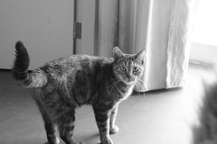 Myrrhe the kitty again (missannemarie91) Tags: cat kat kitty blackandwhitepicture meow pet animal