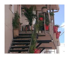 DSCF5054 (garneau.joel2 Thank you for 2,000 view) Tags: flore jardin flower plante plants fiori