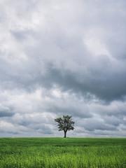 On my own again (grbush) Tags: tree lonetree lonelytree minimalism minimalist countryside rural farm cambridgeshire clouds green lumixg lumixg20f17 olympus em10mark11 england