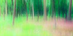 Forêt de Phalempin | Explore #398 21.06.2018 (CrËOS Photographie) Tags: laneuville hautsdefrance arbre poselongue longexposure forêt créatif creative mouvement movement abstrait abstract