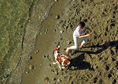 THROW IT THROW IT THROW IT! (Reva G) Tags: dog beach fun summer sunsetbeach vancouver bc ocean waves stick throw play spaniel sand footprints seashore