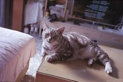 我的寶貝 貝果。My baby Bagel (Ms. Left 阿左) Tags: cat film fujicolor fujifilm olympusmjuii fujicolorsuperiaxtra400 xtra400