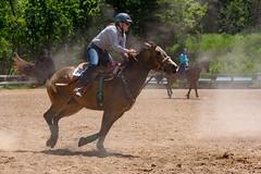 JBC_6373.jpg (Jim Babbage) Tags: krahc bethany appaloosa horses horseshow 2018