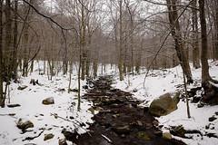 Neu a Santa Fe (Hachimaki123) Tags: parcnaturaldelmontseny montseny santafe santafedelmontseny paisaje landscape neu nieve snow