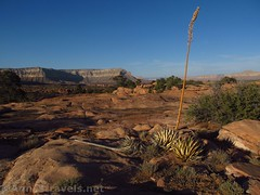 28 Toroweap Sunset (Annes Travels) Tags: grandcanyonnationalpark grandcanyon arizona toroweap sunset yucca