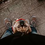 Dog Dienstag thumbnail