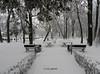 Winter in Bucharest (cod_gabriel) Tags: winter snow park parc bazilescu bazilescupark bucuresti bucureşti bucharest bukarest boekarest bucarest bucareste romania roumanie românia iarna iarnă zapada zăpadă