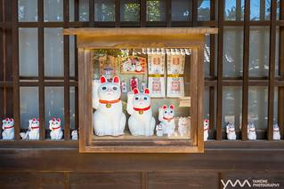 家貓 Cats in the house / Tokyo, Japan