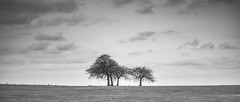 A Charlton Clump 1 (stevedewey2000) Tags: salisburyplain wiltshire spta sptacentre landscape skyscape blackandwhite monochrome bw desaturated trees treescape manualfocus iscogottingenvarioprojar diy homemadelens projectorlens 70120f35 explore explored