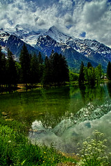 Lac des Gaillands (Fr Paul Hackett) Tags: mountain montblanc lake conifers trees flower sky clouds