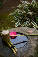 Former Yoshida Family Residence 2 (J_Fish) Tags: japan chiba kahiwa camellia water ladle sony a7iii
