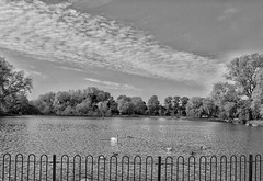 Bring back the sunshine!🌞😊🌞 (LeanneHall3 :-)) Tags: blackandwhite mono lake sky skyscape clouds cloudsstormssunsetssunrises trees branches leaves swan geese birds nature wildlife eastpark hull kingstonuponhull landscape canon 1300d