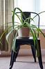 window plant (hr_mick) Tags: window plant sunray weekend indoor natural light lighting