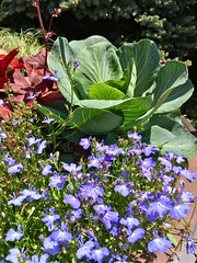 Olbrich Botanical Gardens (JBDPICS1) Tags: olbrichbotanicalgardens madisonwisconsin nature