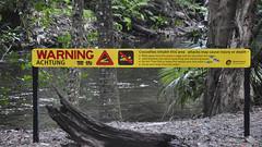 DSC03177 (slackest2) Tags: 4wd bloomfield road cape tribulation wujal track water rainforest wet mountains trees toyota troopy forest tree daintree national park emmagen creek croc warning sign