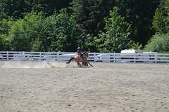 DSC_4085 (Primespot Photography) Tags: show horse horseshow game games horsegames barrels barrells barrals barralls pony