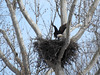 JLJ900_1615_edited-1 (Joni James) Tags: bald eagles nest morgan county indiana joni james incubation brooding