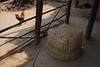 captive, baaj (nevil zaveri (thank U for 15M views:)) Tags: zaveri street animals birds chicken bamboo rural dang baaj village gujrat india people images stockimages gujarat nevil nevilzaveri stock photo mudhouse sunlit shadows captive hen cock