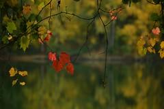 DSC_8053 (emina.knezevic) Tags: nature naturephotography waterfall autumn leafs woods reflection redleaf autumnleafs