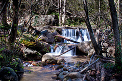 La riera (J.Pineda66) Tags: agua riera riu rio river mountain forest
