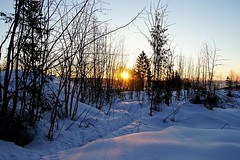 A cold spring morning. (janrs7) Tags: spring winter winterwonderland sunrise morning morninglight march cold snow trees silhouettes norway afsnikkor1855mmf3556