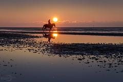 Freedom Rider (*Photofreaks*) Tags: adengs wwwphotofreakseu rider reiter sunset sonnenuntergang niedersächsischeswattenmeer lowersaxonwaddensea northsea nordsee deutschland germany lowersaxony niedersachsen aoi elitegalleryaoi bestcapturesaoi aoi3levels