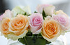 Roses (LuckyMeyer) Tags: makro pastell rose flower fleur blume blüte plant pink orange
